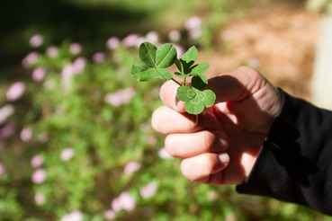 03.13.13Four_Leaf_Clovers 3