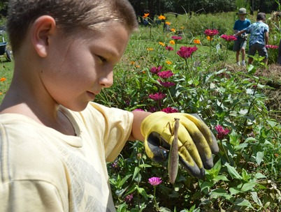 Gr 3 Gardening Cole  Mantis