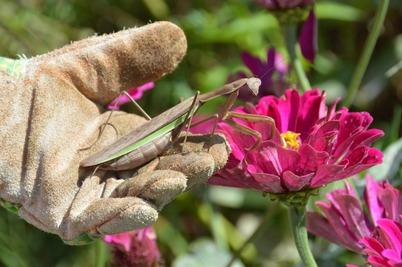 Gr 3 Gardening Mantis Flower