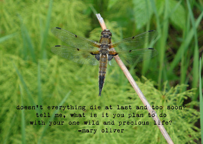 03-27-13MaryOliver 2